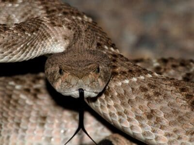 A Discover the Most Interesting Reptiles in North America!
