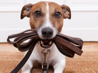 A The Best Dog Leash Holders: Reviewed for 2021