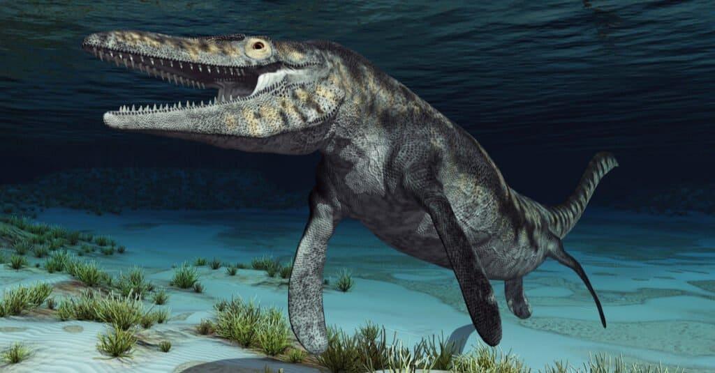 Megalodon vs. Mosasaurus - Mosasaur