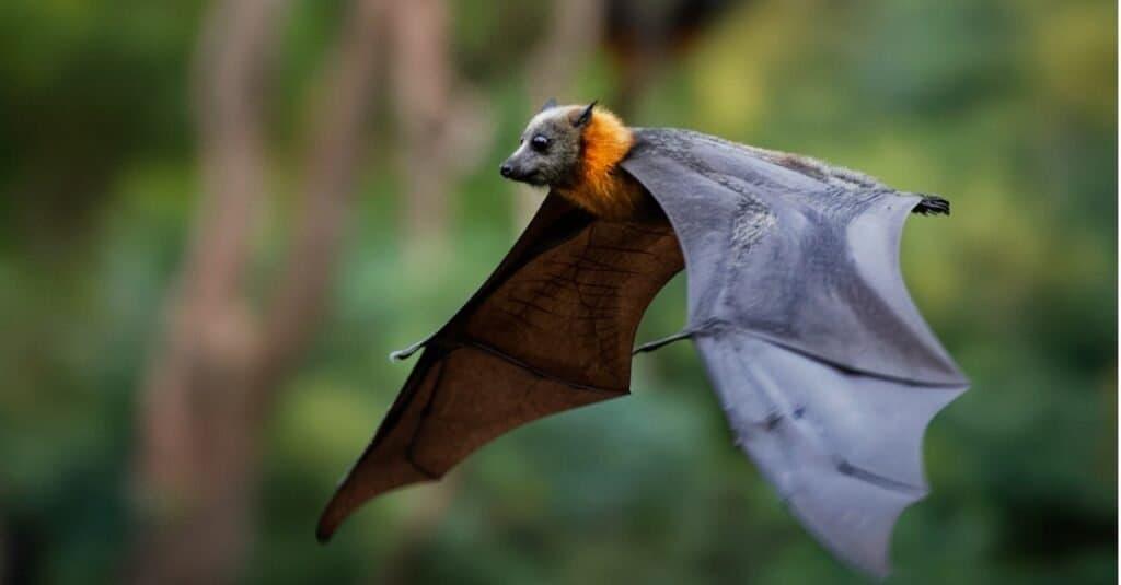 Animals That Use Sonar-bat