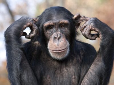 A 10 Animals with Opposable Thumbs – And Why It's So Rare
