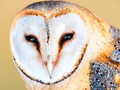 A What Do Owls Eat?