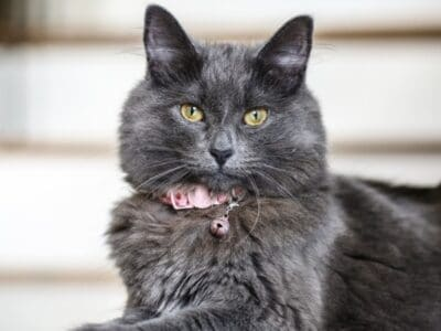 A The Best Cat Shock Collars: Reviewed for 2021