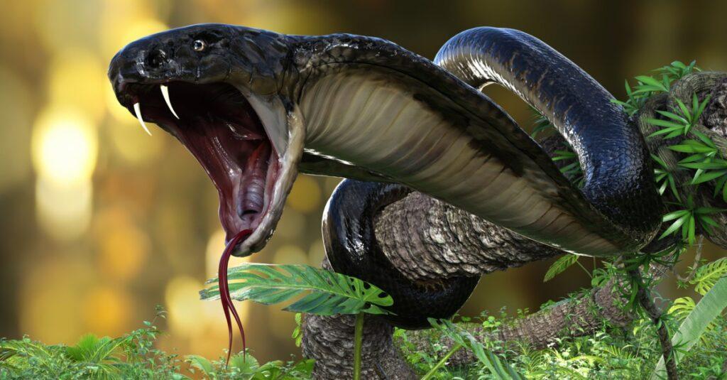 What do snakes eat - king cobra striking