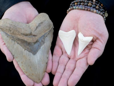 A 13 Mind-Blowing Megalodon Facts!