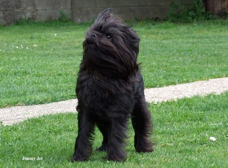 Jet Black Dog Breeds