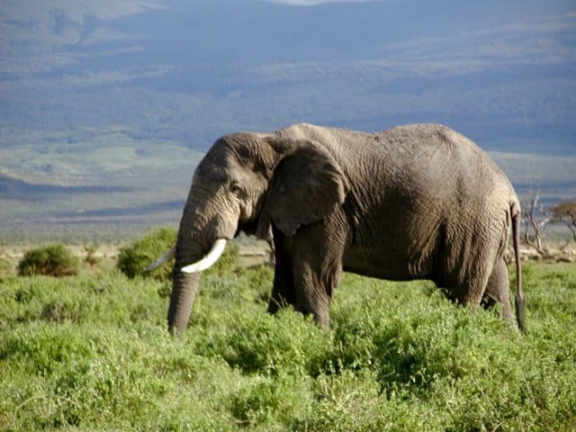 Picture 4 of 8 - Afric...