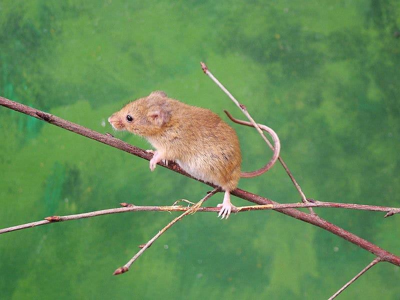 Phylum Chordata Animals List Animal Classification