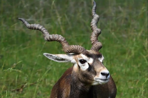 Antelope Incredible Facts A Z Animals Our mission is to help you eat and cook the healthiest way for optimal health. antelope incredible facts a z animals