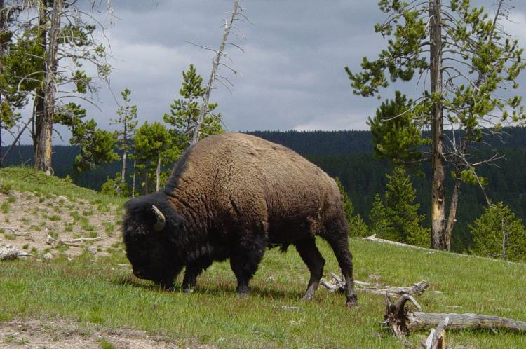 Yellowstone Island Park Cabins