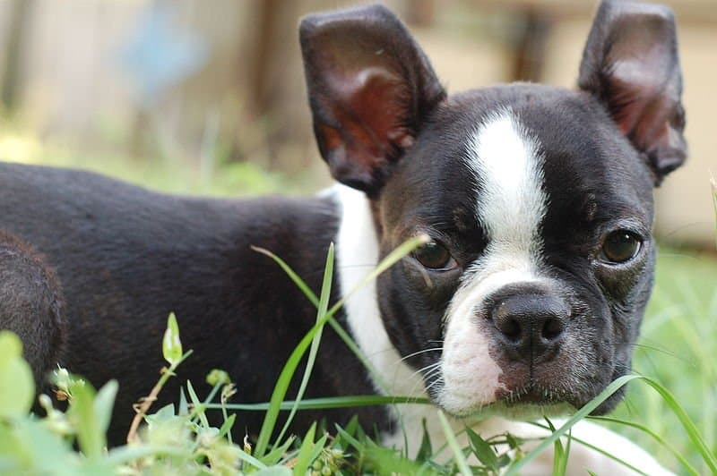 Big Names For Little Male Dogs