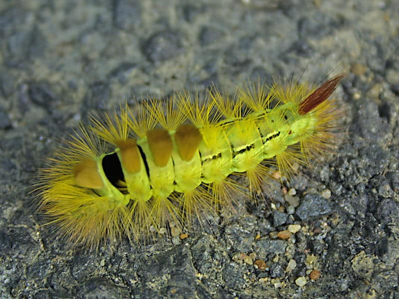 http://a-z-animals.com/media/animals/images/original/caterpillar10.jpg