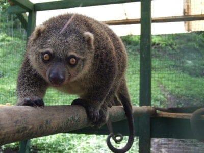 A Cuscus