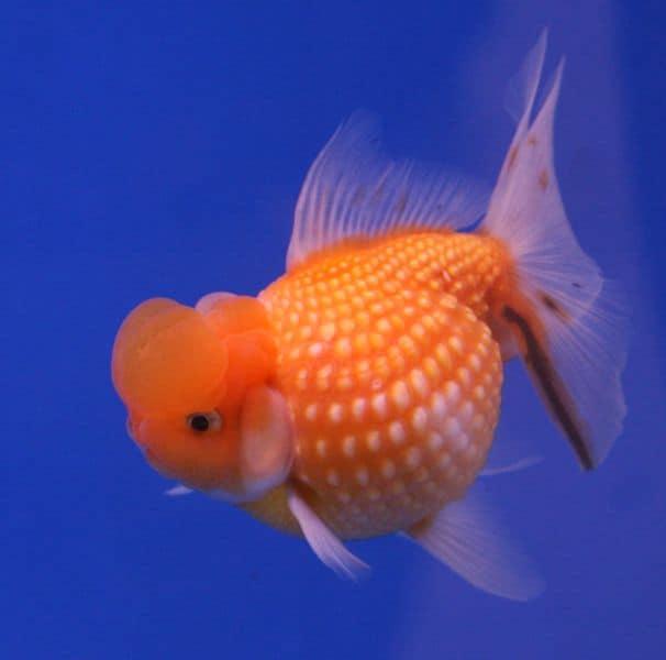 Fish - Animals - A-Z Animals
