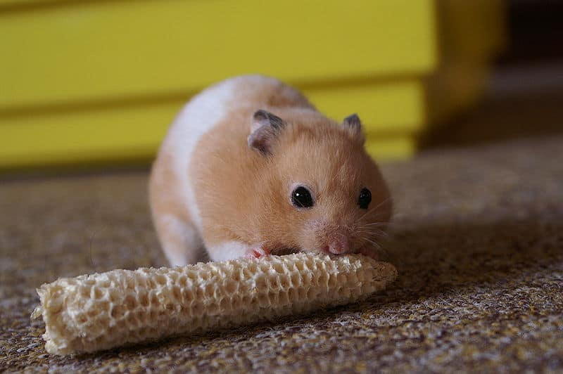 hamsterxxxvideos Reduce Support Costs.