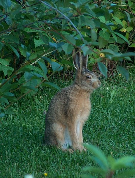 Hare sitting in forest