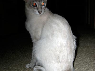 A Javanese