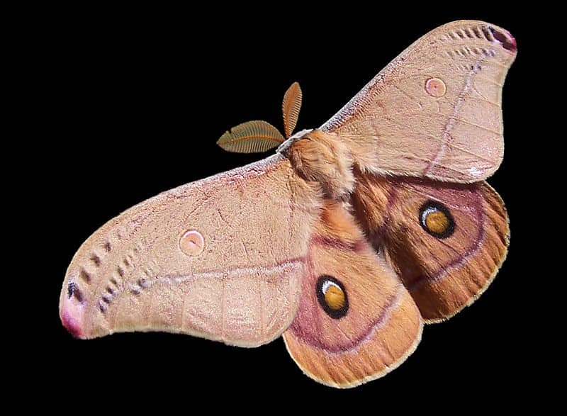 Moth on black background