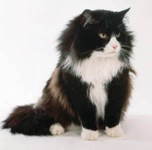 A Norwegian Forest