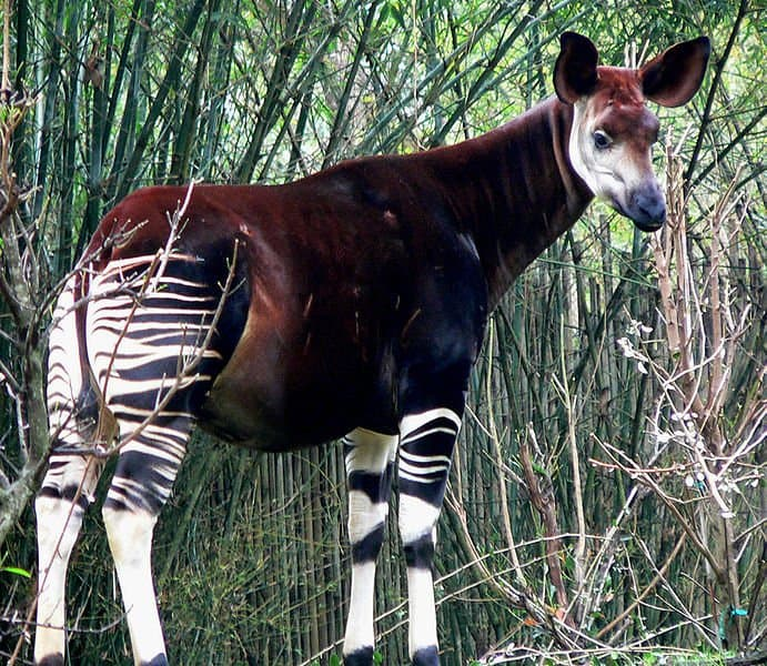 interesting-facts-unique-animals-अजीब जानवर
