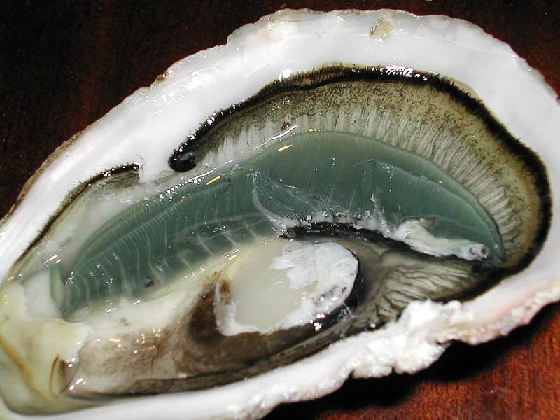 Picture 5 of 5 oyster ostreidae pictures images for Interieur huitre