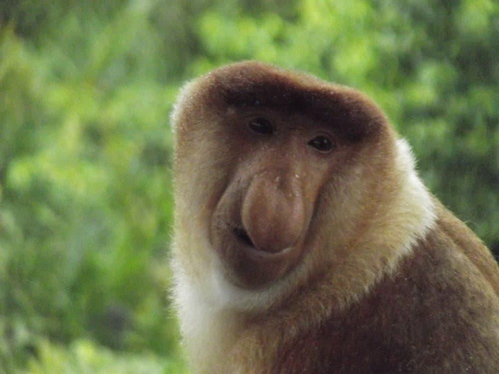 Names for monkeys males