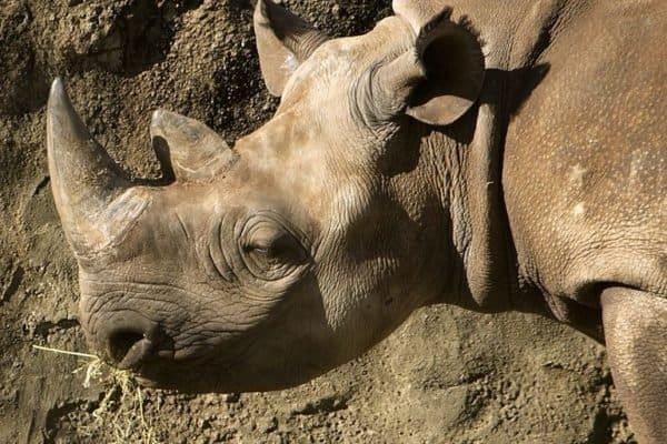 View Rhino Top Speed