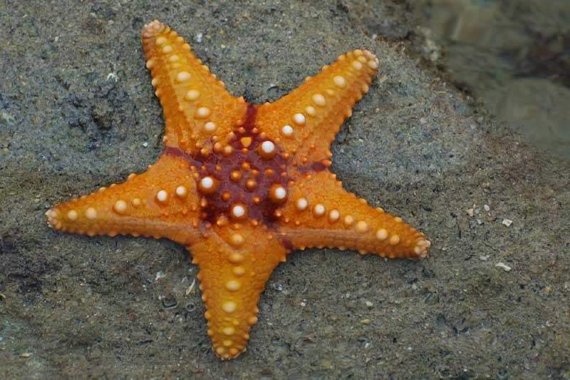 http://a-z-animals.com/media/animals/images/original/starfish2.jpg
