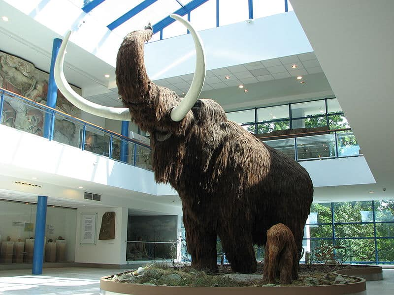 Wooly Mammoth Museum Of Natural History