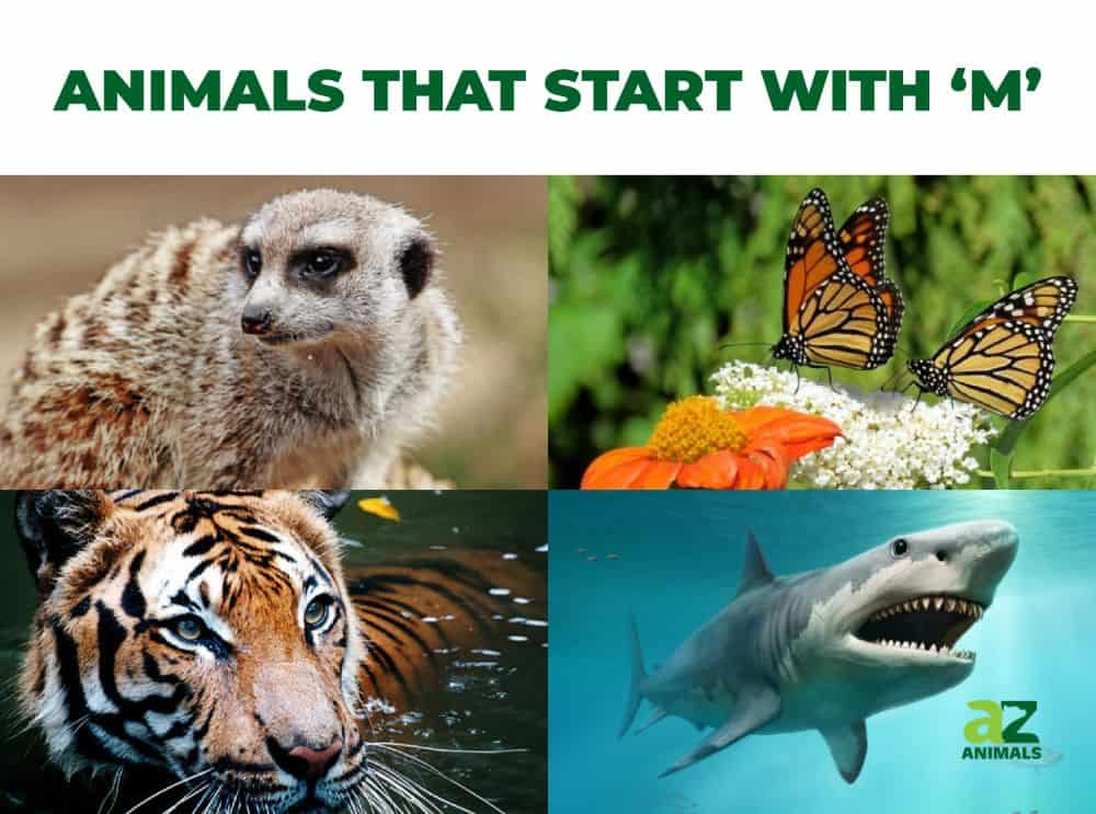 Animals that Start with M