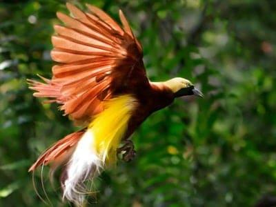 A Birds Of Paradise