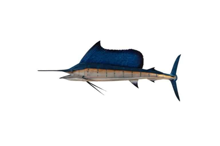 black marlin isolated on a white background