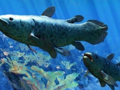 Coelacanth pair underwaterr