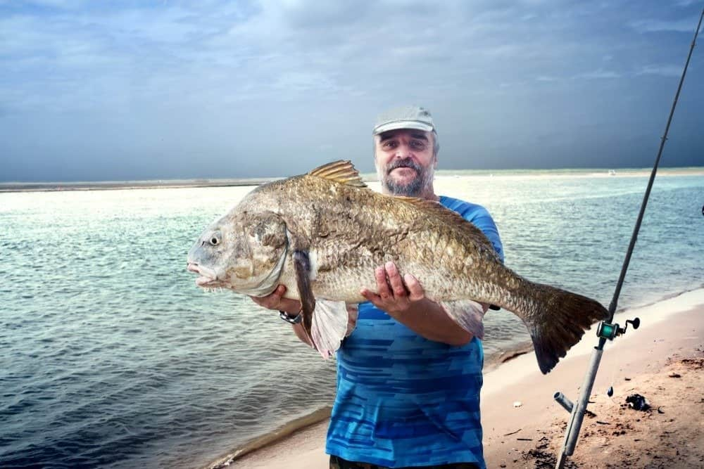 A fisherman is holding a huge fish black drum fish (Pogonias cromis) against the sea. Texas, the Mexican Gulf, the United States