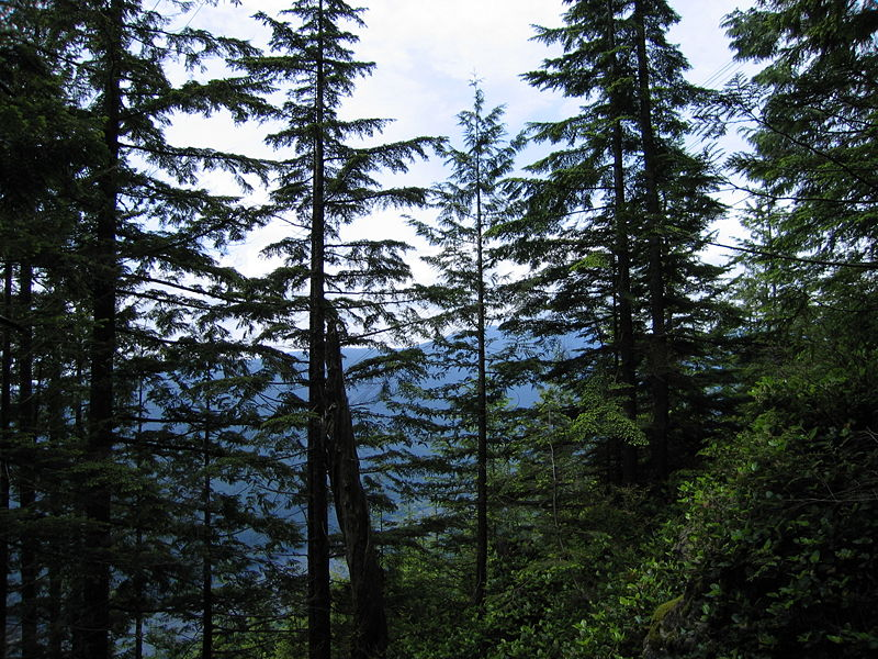Coniferous Forest - Reference - A-Z Animals