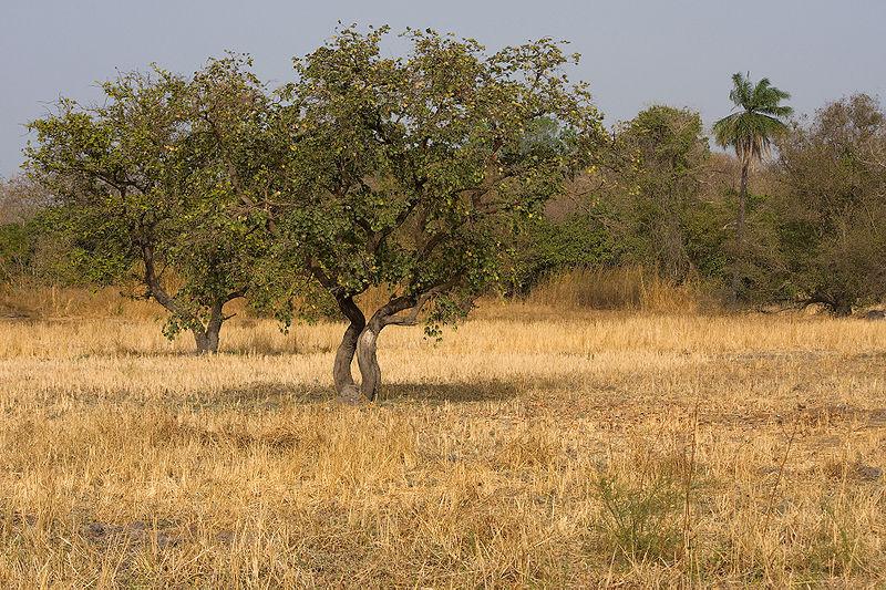 African Grasslands Plants