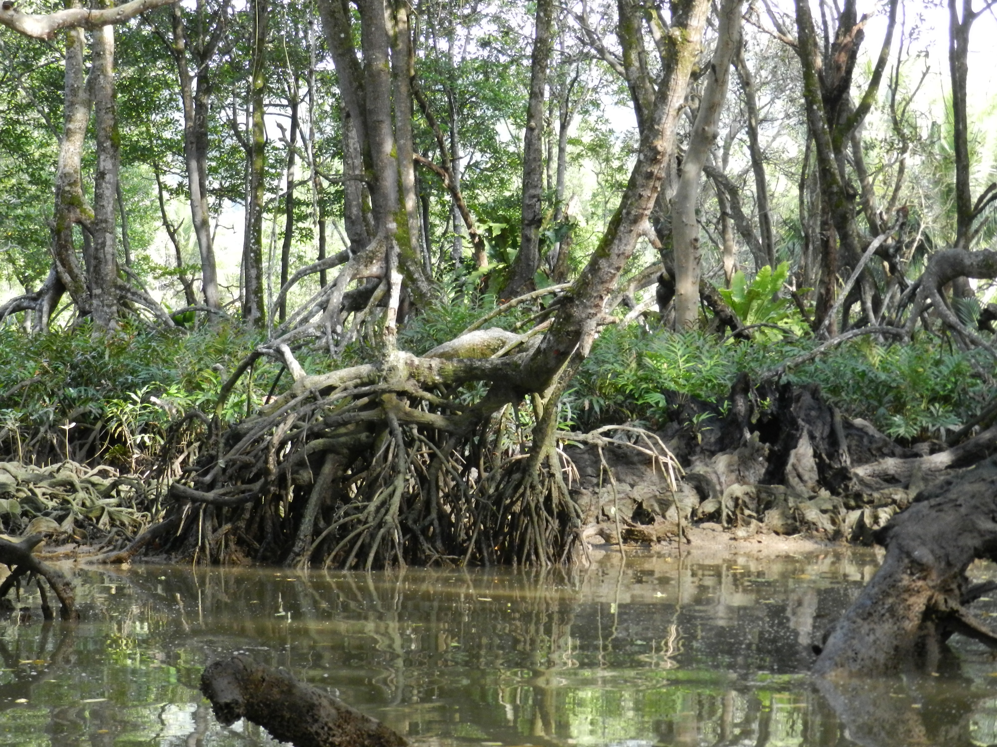 Swamps and Wetland - Reference - A-Z Animals