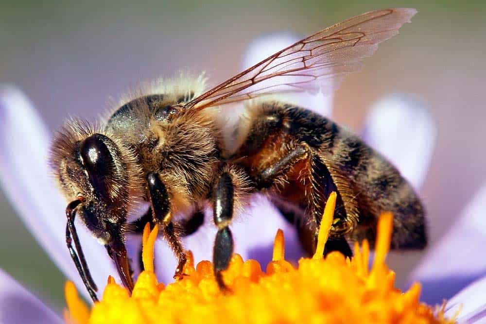 honey bees rank among the smartest animals on Earth