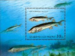 Beluga Sturgeons On Stamp