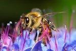 Bumble Bee Close Up