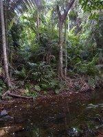 Globoka džungla <