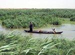Native Arabs On Marsh   <a href=