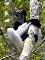 An Indri   <a href=