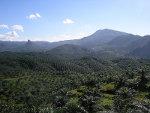 Vast Plantation Java