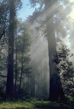 جنگل میں دھند <