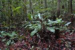 Peat Swamp Forest   <a href=