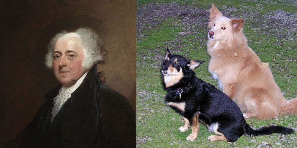 President John Adams had mixed-breed dogs