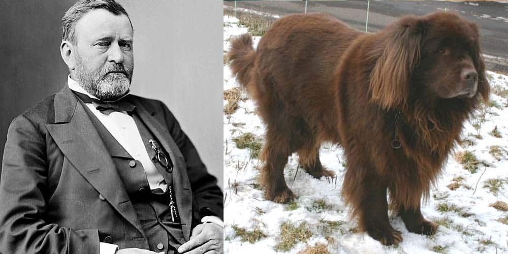 Ulysses S. Grant had a Newfoundland dog in the White House