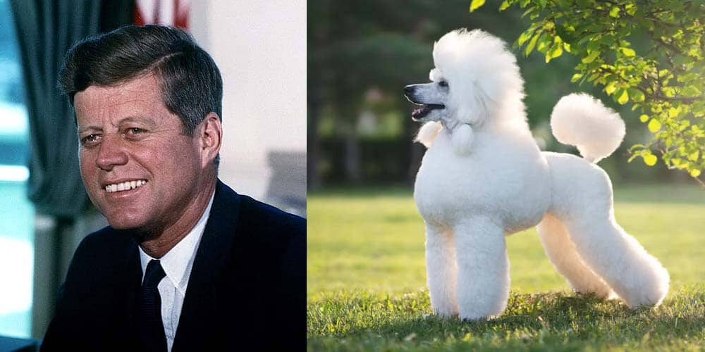 Jonh F. Kennedy had many dogs including a poodle