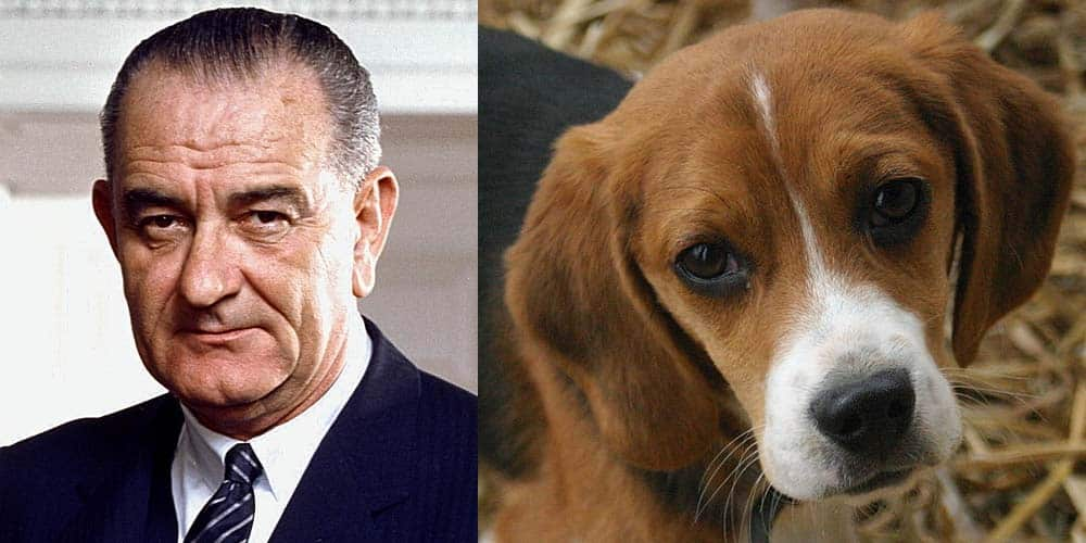 Picture of Lyndon Johnson next to picture of a Beagle